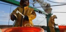 La pêche à la coquille