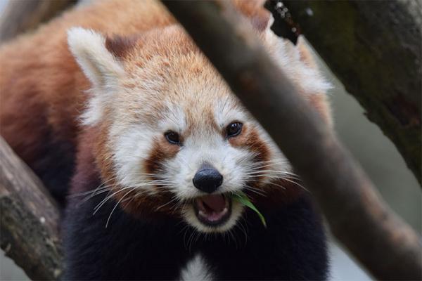 Asa à la conquête du zoo de Mulhouse