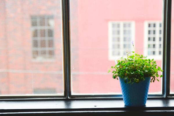 Feel Good: «Comment rempoter ses plantes d'intérieur»