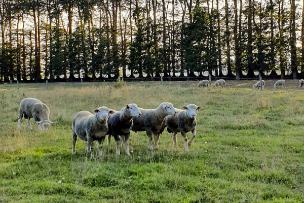 Mon Panier 76: la ferme Lenouvel