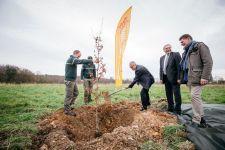 Plantation du 1 er arbre du projet agroforestier sur le site des Essarts